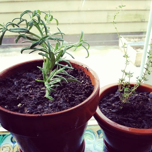 How to regrow herbs at home