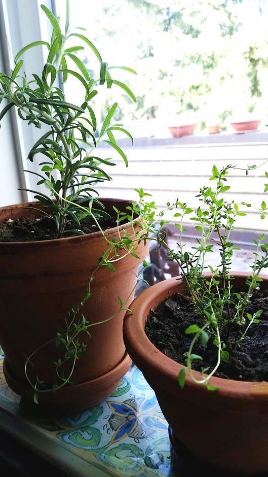 How to regrow herbs at home2
