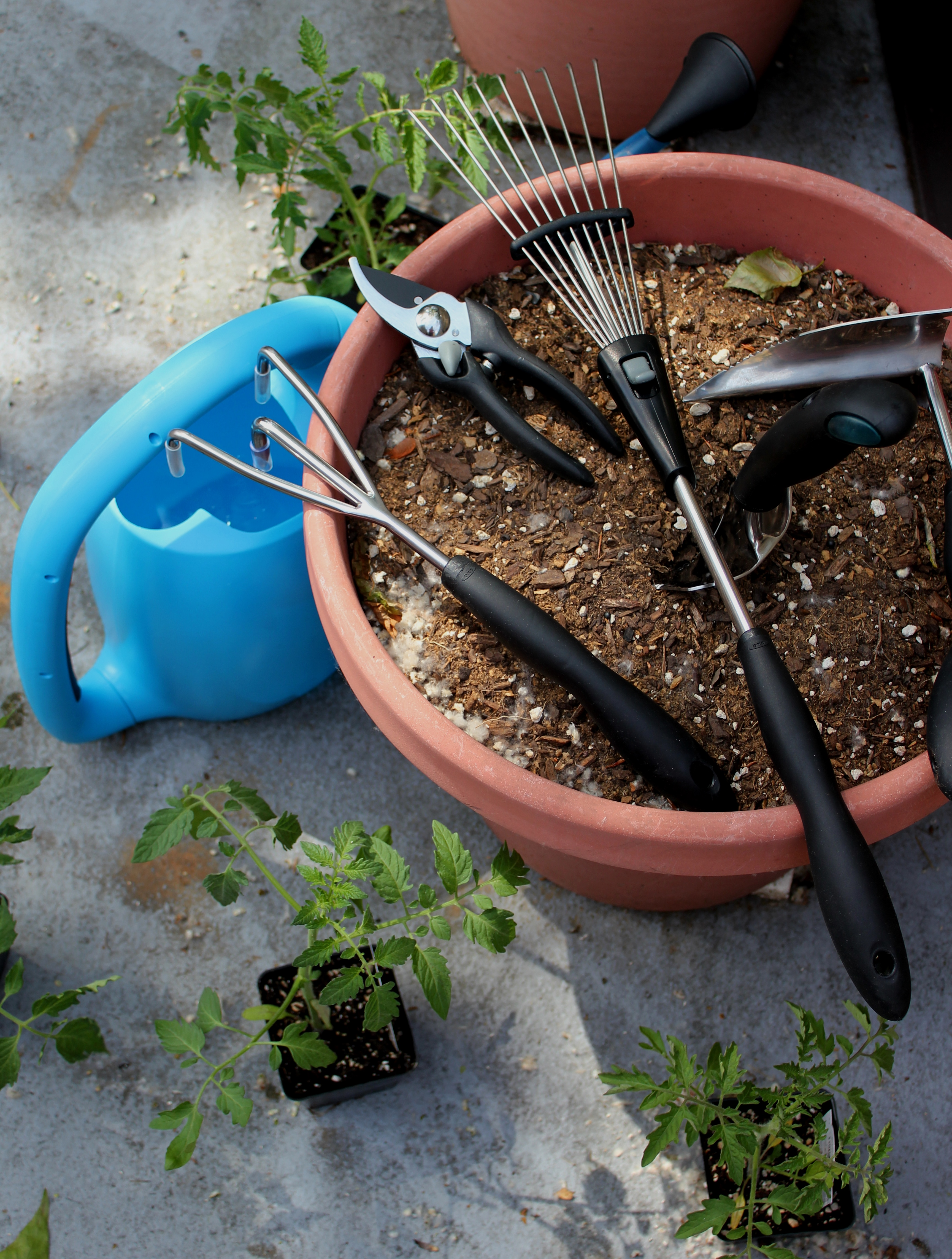 Planting tomatoes with oxo outdoor gardening set for Gardening tools used in planting