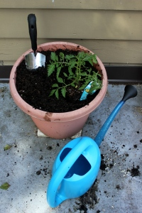 Planting tomatoes with oxo gardening tools (6)