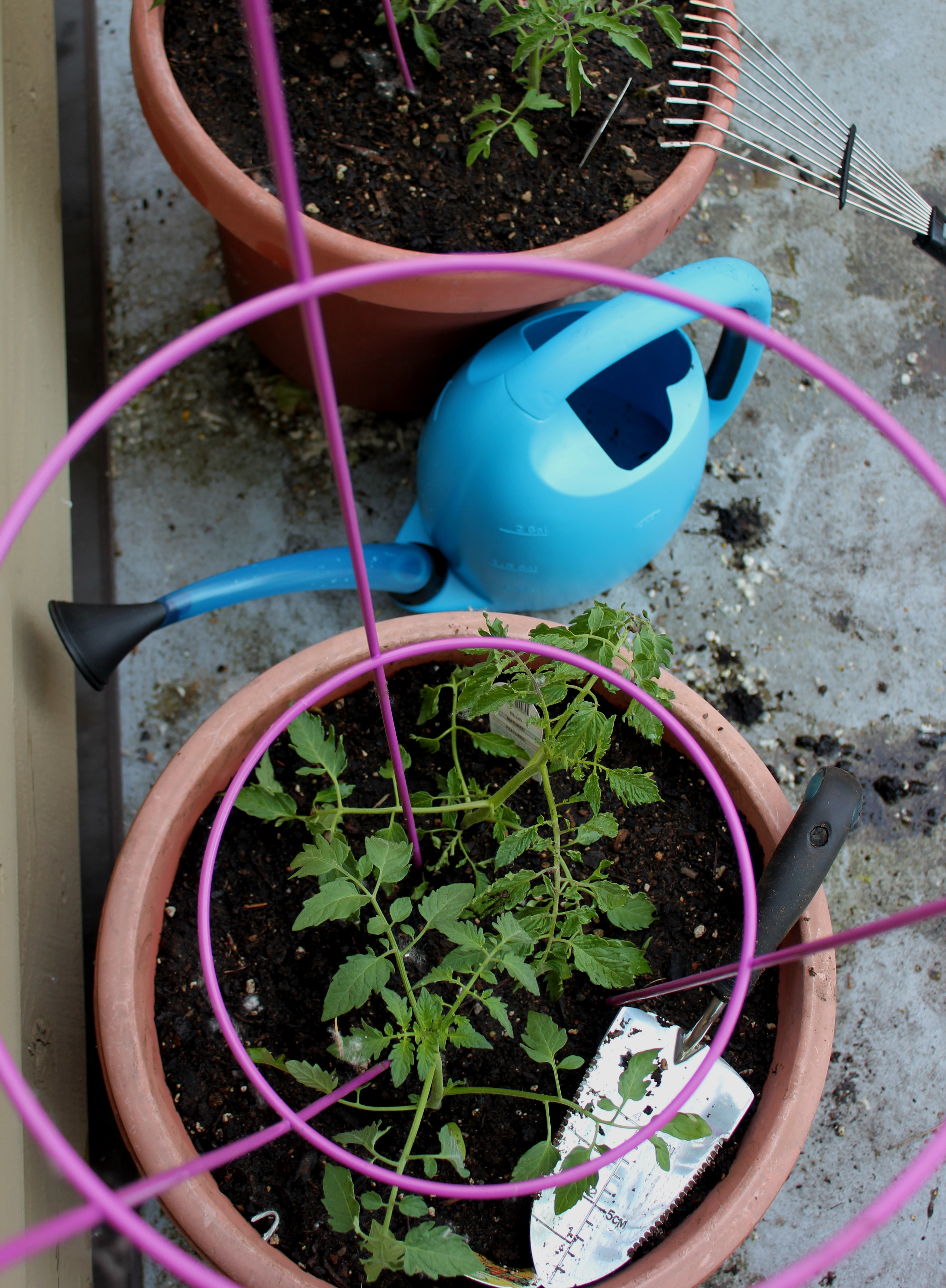 Planting Tomatoes With Oxo Gardening Tools (9)